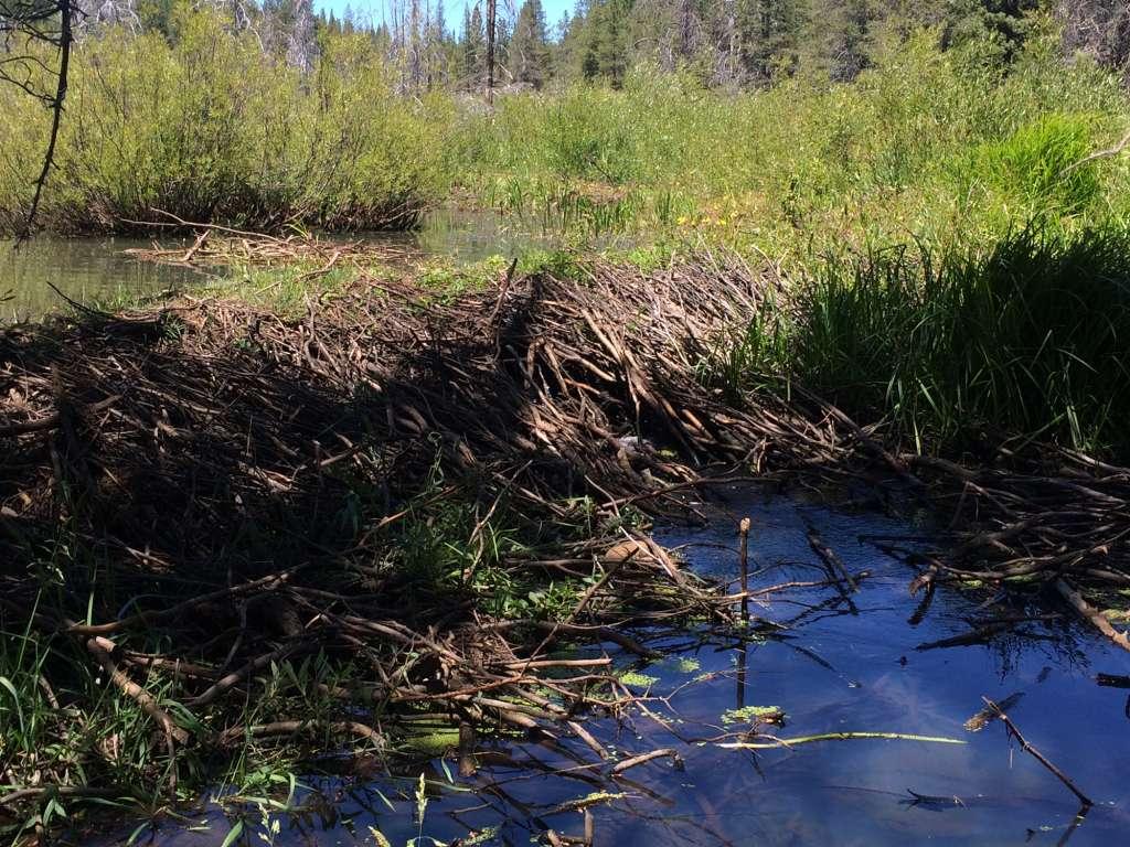 Beaver-Pond-1024×768
