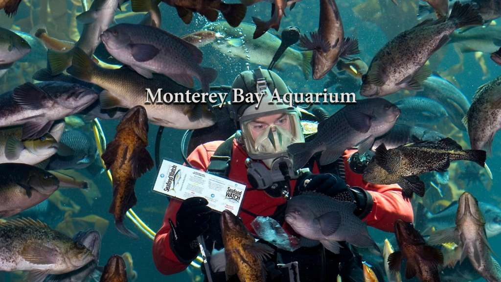 Monterey Bay Aquarium graphic