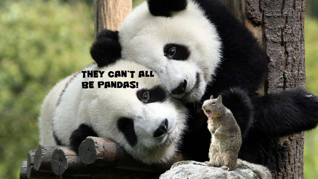 They-cant-all-be-Pandas-1024×576