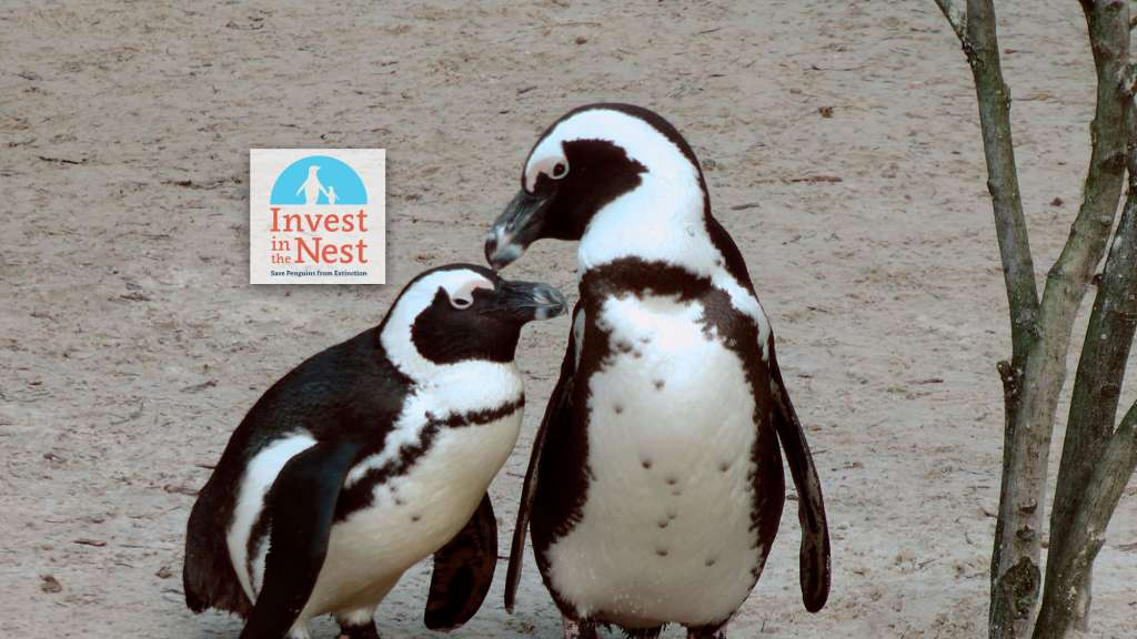 "Penguins. ""Invest in the nest"""