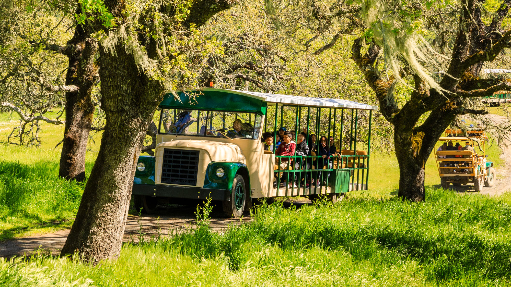 Young people on a field trip at Safari West